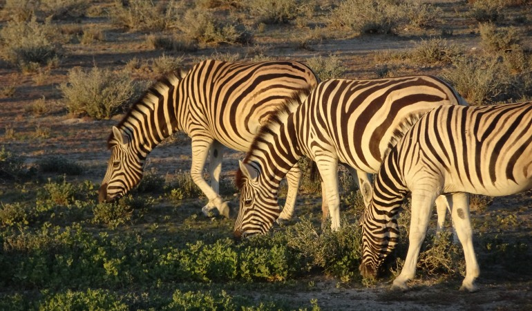 Best of Namibia in twelve days