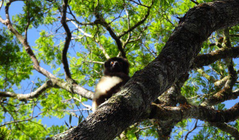 Madagascar 2: Ranomafana
